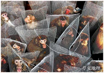 http://egalite.animale.free.fr/images/newsletter/singes_vivisection.jpg